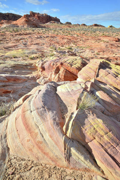Photograph - Multicolored Beehives In Valley Of Fire by Ray Mathis