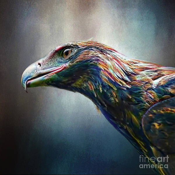 Wall Art - Photograph - Multicolored Eagle By Kaye Menner by Kaye Menner