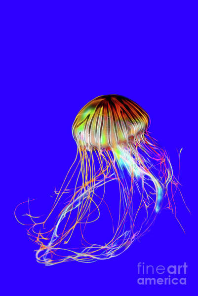 Deep Space Mixed Media - Multicolored, Merry Jellyfish Floating Under The Water On A Blue Background by Viktor Birkus