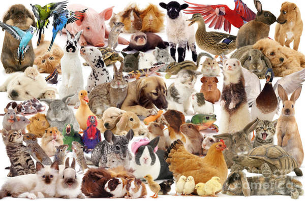 Photograph - Multiple Pets Montage by Warren Photographic