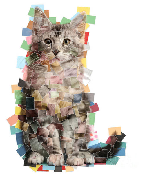 Photograph - Multiple Photo Cat Mosaic by Warren Photographic