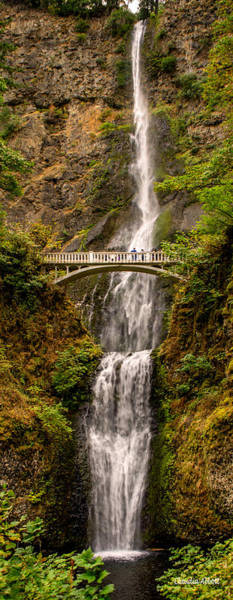 Photograph - Multnomah Falls  by Claudia Abbott