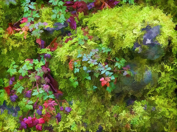 Photograph - Multnomah Falls Moss by Wes and Dotty Weber
