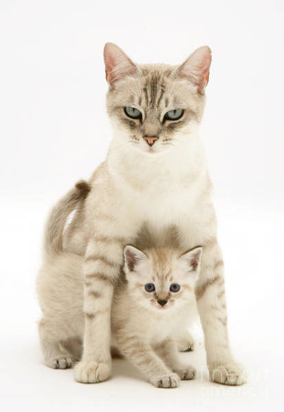 Photograph - Mum And Cuddly Kitty by Warren Photographic