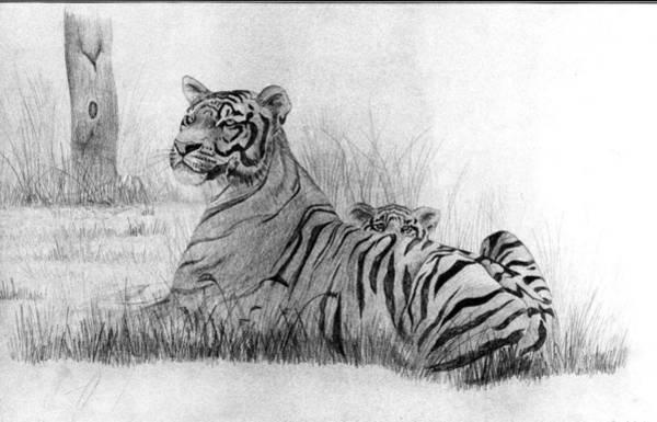 Bengal Tiger Drawing - Mum And Me by Vikramaditya Singh