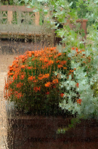 Wall Art - Photograph - Mums Behind Rain-drenched Window by Don Schroder