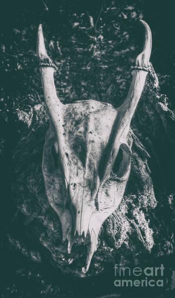 Deer Skull Digital Art -  Muntjac Skull  by Nigel Bangert