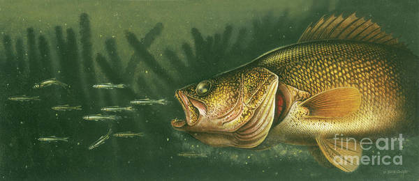 Painting - Murky Water Walleye by JQ Licensing
