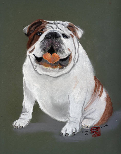 English Bulldog Painting - Murphy by Arlene  Wright-Correll