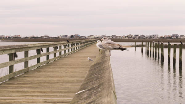 Photograph - Murrells Inlet Pier With Seagulls by MM Anderson