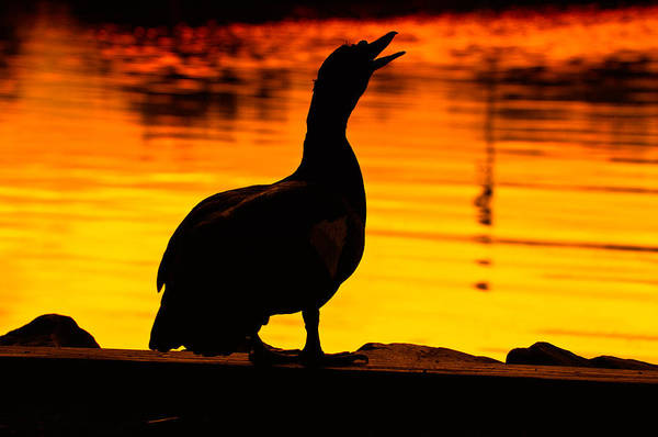 Wall Art - Photograph - Muscovy Sunset by Rich Leighton