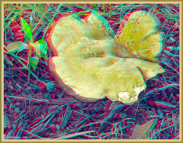 Anaglyph Photograph - Mushroom - Use Red-cyan 3d Glasses by Brian Wallace