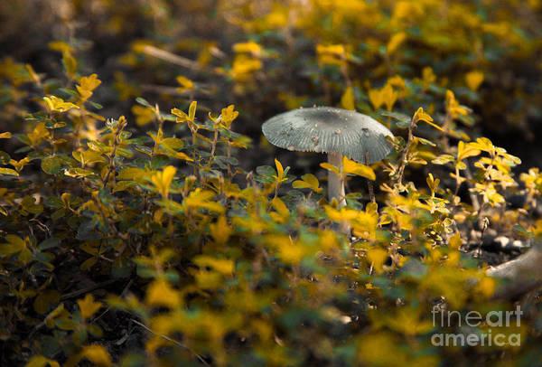 Photograph - Mushroom 1 by Heather Roper