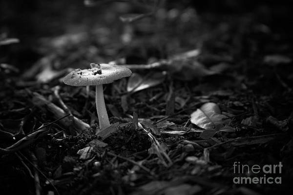 Photograph - Mushroom 3 by Heather Roper