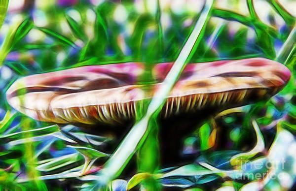 Photograph - Mushroom Art by D Hackett