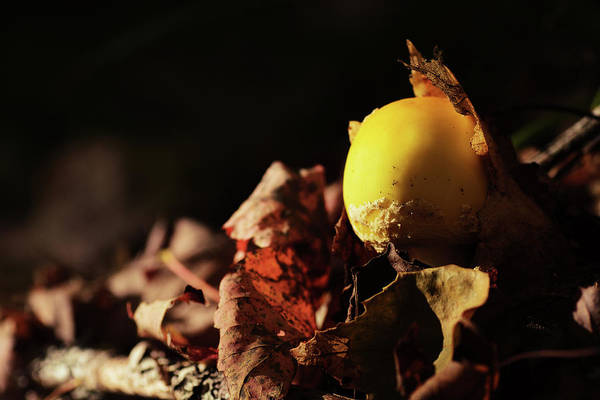 Fungi Photograph - Mushroom Magic 3 by Susan Capuano