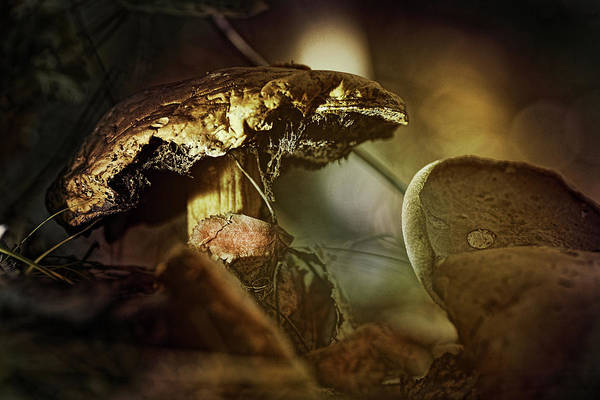 Fungi Photograph - Mushroom Magic by Susan Capuano