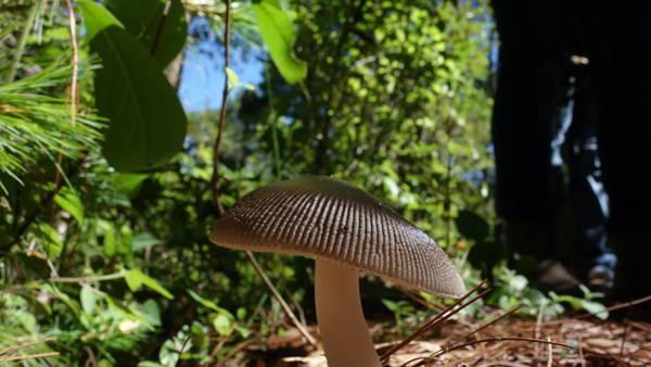 Photograph - Mushroom by Matthew Bamberg