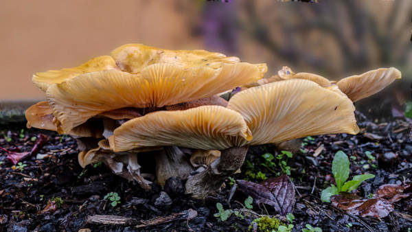 Photograph - Mushroom Panorama by HW Kateley