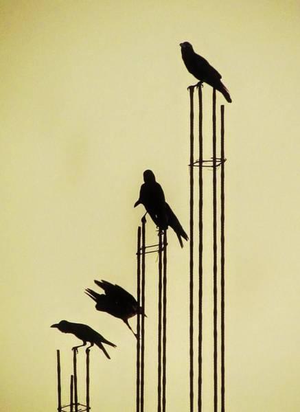 Photograph - Music And Birds-sri Lanka by Duncan Davies