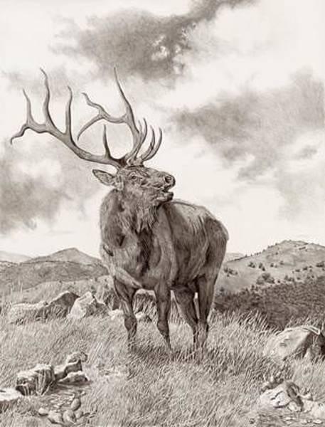 Bugling Drawing - Music Of The Wichitas by Bryan Bramblett