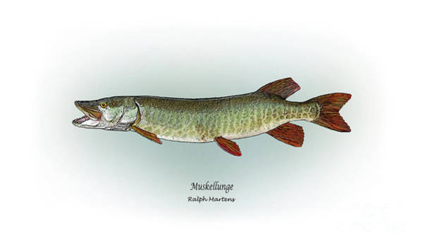 Angling Art Painting - Muskellunge by Ralph Martens