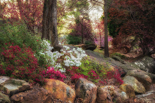 Honor Heights Park Photograph - Muskogee Azaleas by James Barber