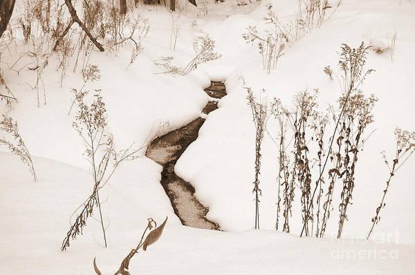 Photograph - Muskoka Winter 1 by Kathi Shotwell