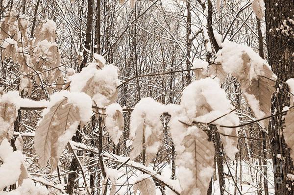 Photograph - Muskoka Winter 6 by Kathi Shotwell