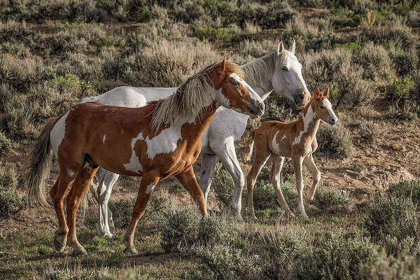 Wall Art - Photograph - Mustang Family by Dawn Key