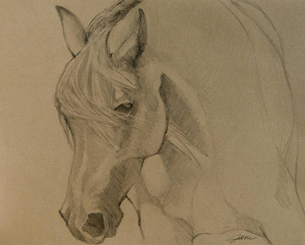 Drawing - Mustang Morning - Grey Version by Jani Freimann