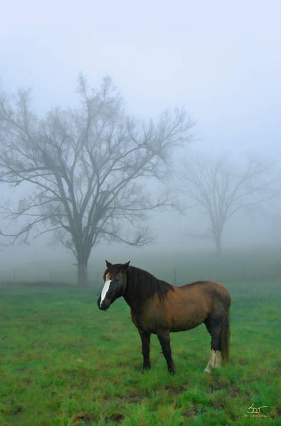 Photograph - Mustang Morning by Sam Davis Johnson