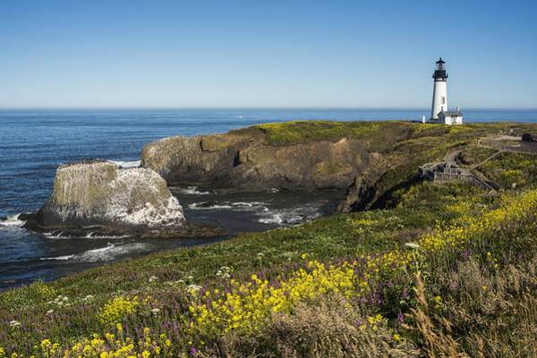 Photograph - Mustard On Yaquina Head by Robert Potts