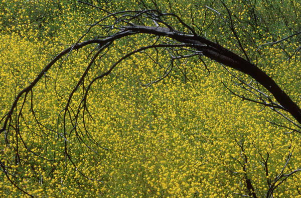 Wall Art - Photograph - Mustard - Serrano Canyon by Soli Deo Gloria Wilderness And Wildlife Photography