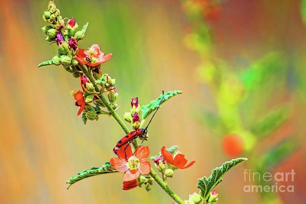 Photograph - Mutant Ninja Ladybug by Susan Warren