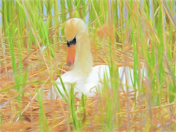 Digital Art - Mute Swan Nesting. by Rusty R Smith