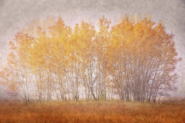 Photograph - Muted Gold by Leda Robertson