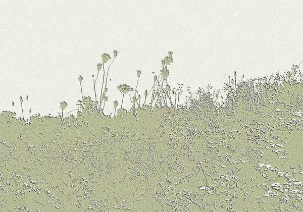 Wall Art - Photograph - Muted Green Dandelions by Ellen O'Reilly