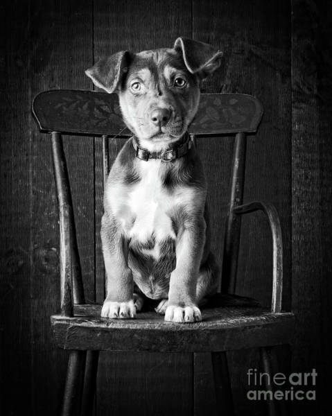 Wall Art - Photograph - Mutt Black And White by Edward Fielding
