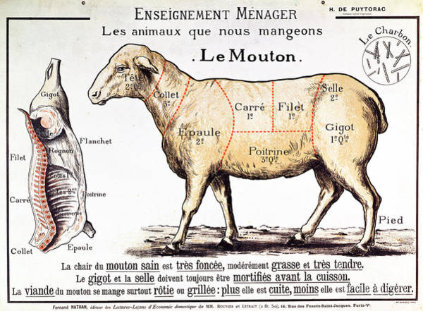 Wall Art - Drawing - Mutton by French School