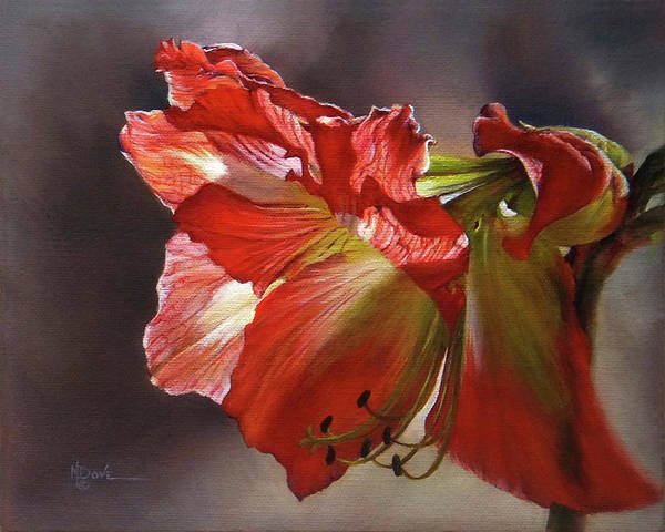 Amaryllis Painting - My Amaryllis Coming Out Of Shadows #2 by Mary Dove
