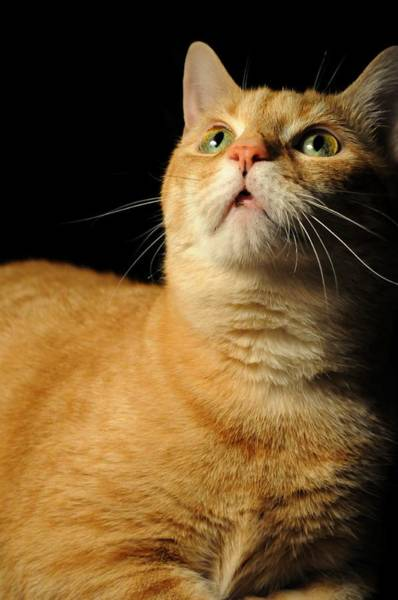 Orange Tabby Photograph - My Baby by Diana Angstadt