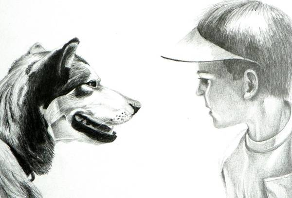American Eskimo Dog Drawing - My Best Friend  by David Ackerson