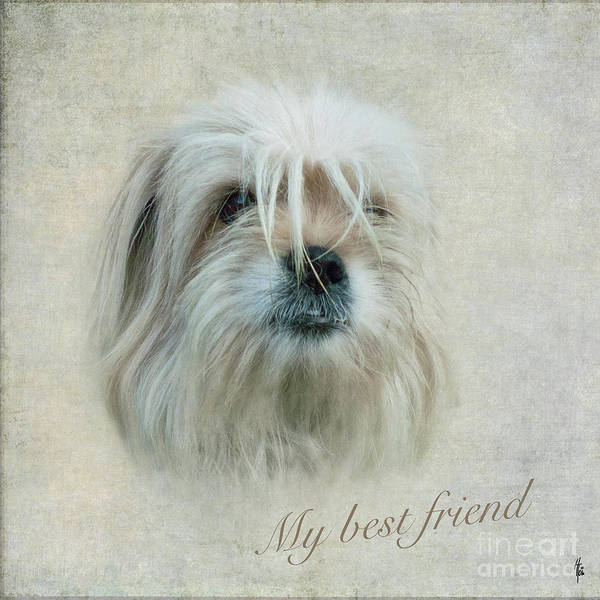 Photograph - My Best Friend by Heiko Koehrer-Wagner