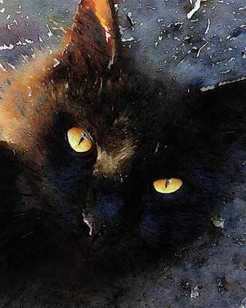 Photograph - My Black Cat by Alice Gipson