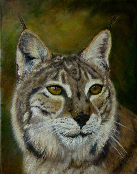 Wall Art - Painting - My Bobcat by Darlene Green