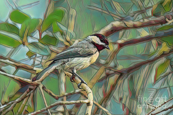 Wall Art - Photograph - My Chickadee Buddy by Deborah Benoit