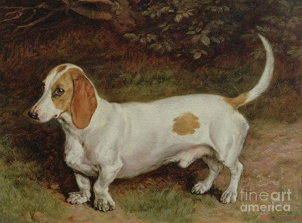 Favourite Wall Art - Painting - My Favorite Dachshund by Frank Paton