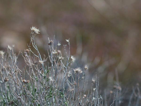 Photograph - My Field 5 by Rick Mosher