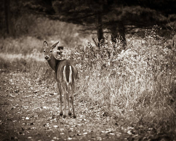 Photograph - My Good Side by Chris Bordeleau